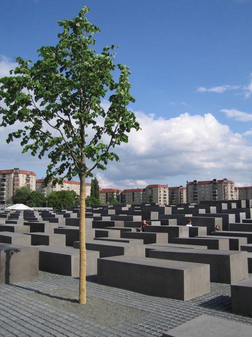 Одно из 41 деревьев мемориала.