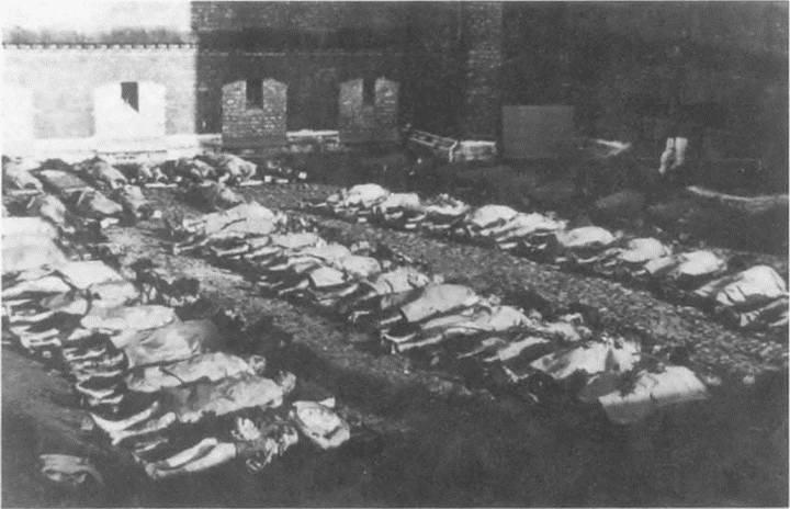 Эксгумированные трупы латышей, расстрелянных НКВД в июне 1941 г. Июль 1941 г.