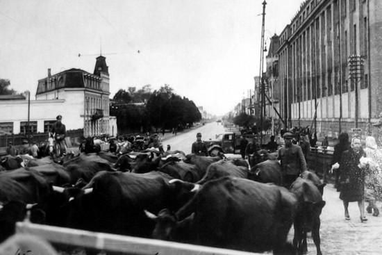 Немцы «эвакуируют» имущество рижан. Октябрь 1944 г.