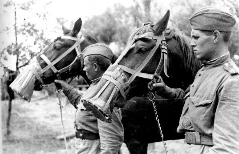 Советские кавалеристы с лошадьми на морды, которых одеты носовые чехлы, защищающие ноздри от пыли и насекомых. 1944 г.