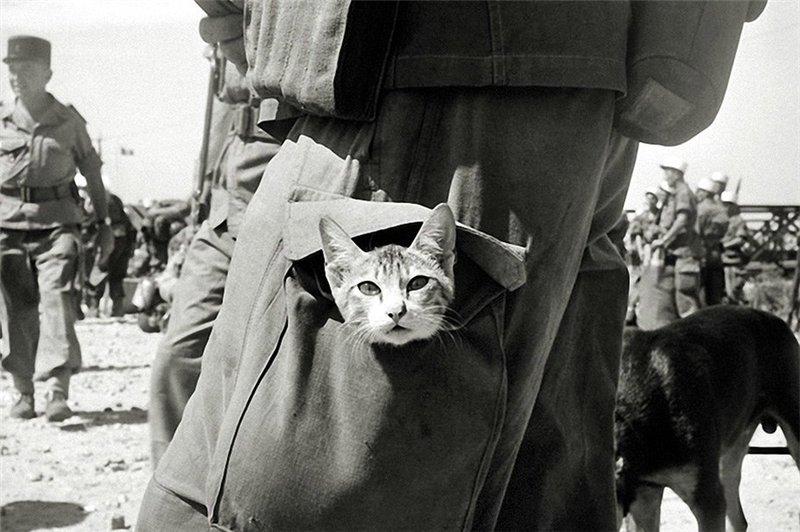 Кот по кличке Пинчер — талисман корабля HMS VINDEX. 1944 г.