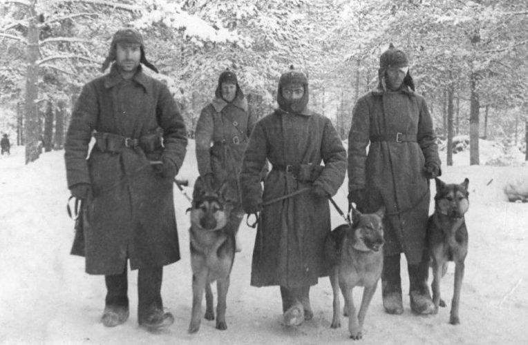 Советские военные собаководы отдельного батальона связи со связными собаками. Ноябрь 1939 г.