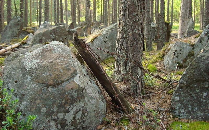 Между гранитными противотанковыми надолбами были ряды колючей проволоки.