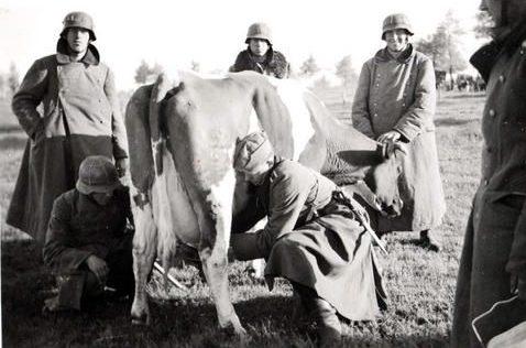 Добыча «млека». Украина. 1943 г.