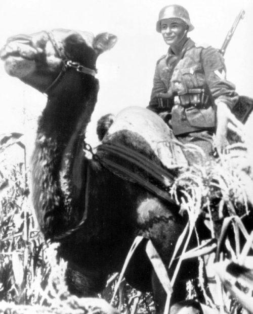 Немецкий егерь на Кубани. 1942 г.