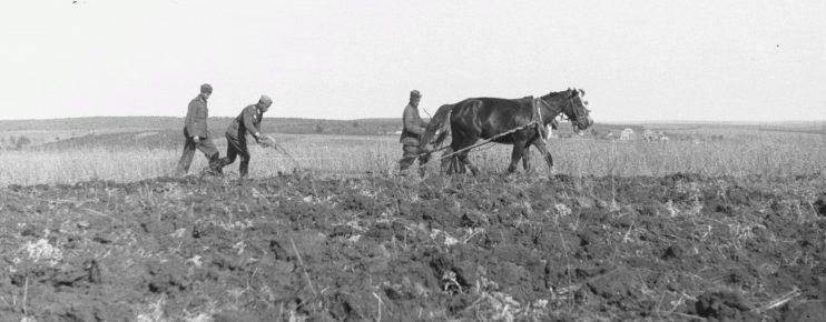 Немецкие солдаты пашут поле в Белгородской области. 1943 г.