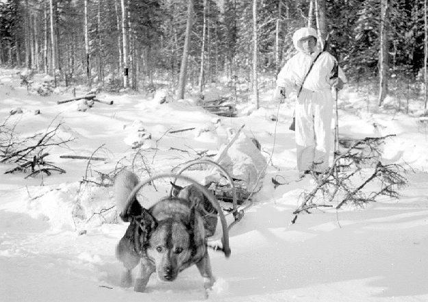 Собачья упряжка финского разведчика. Февраль 1940 г.