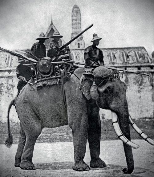 Элефантерия Сиама. 1860 г.