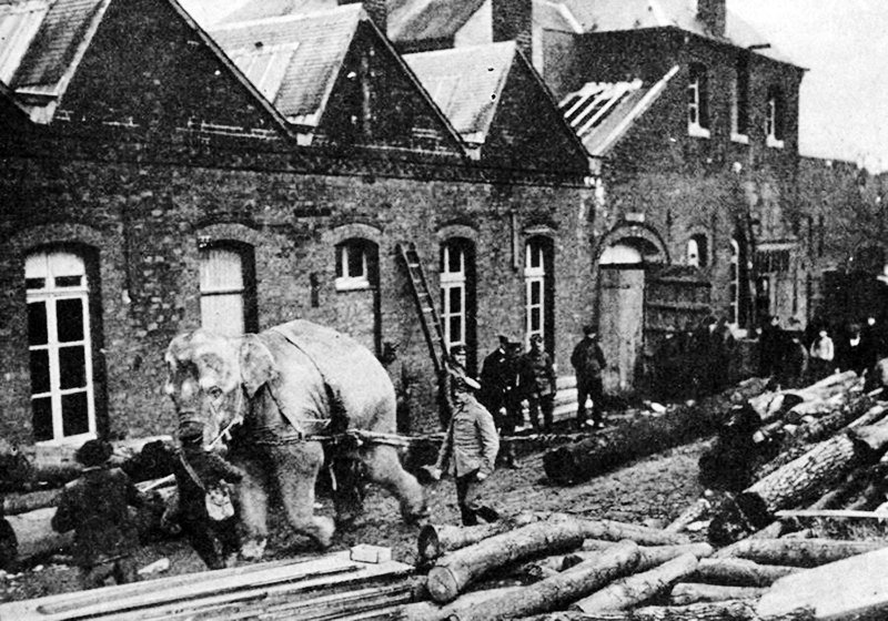 Использование слонов в годы Первой мировой войны.