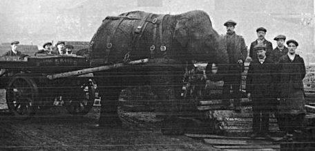 Слониха Сара работает на военном заводе. Остров Келхем. 1916 г.