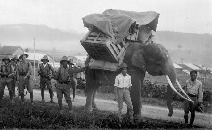 Перевозка военных грузов. Индонезия, 1940 г.