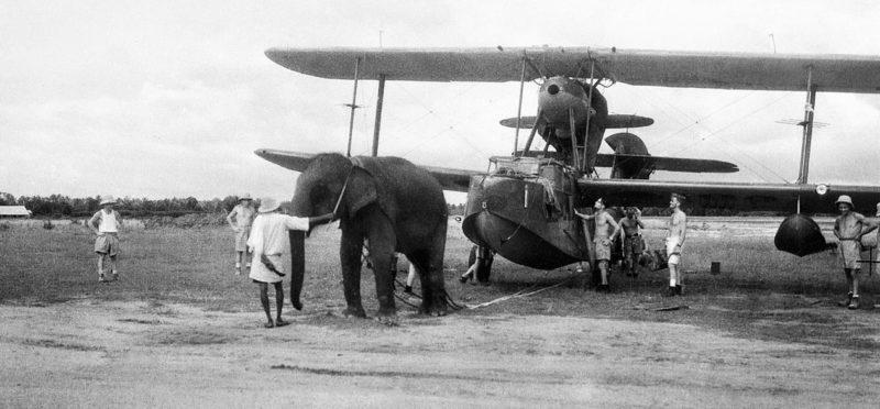 Слон, буксирующий самолет «Supermarine Walrus» на аэродроме ВМФ в Индии. Июнь 1944 г.