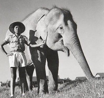 Слон китайской армии Линь Ван.