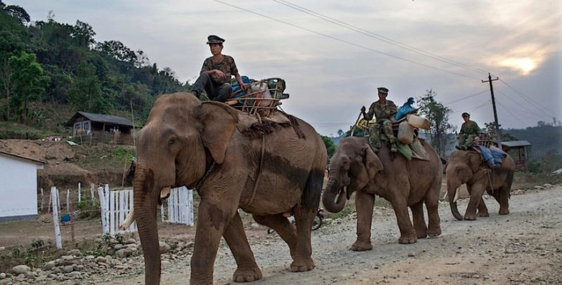 Повстанцы Армии независимости Качина едут на слонах к линии фронта в Мьянме в апреле 2012 года.