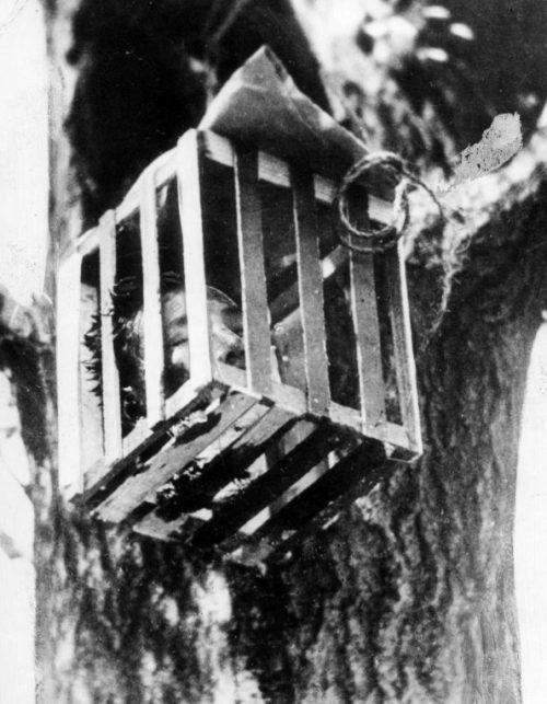 Отрезанная голова китайца в клетке на дереве. Декабрь 1937 г.