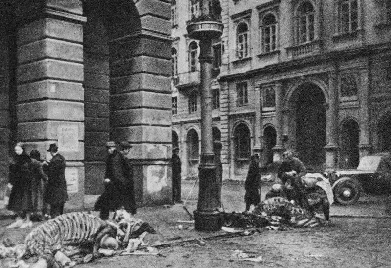 Скелеты обглоданных лошадей во время осады города.