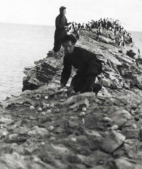 Мурманские дети собирают яйца диких птиц. 1942 г.