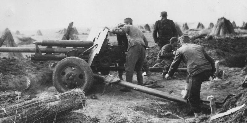 76-мм дивизионная пушка ЗИС-3 на Сремском фронте. 1945 г.