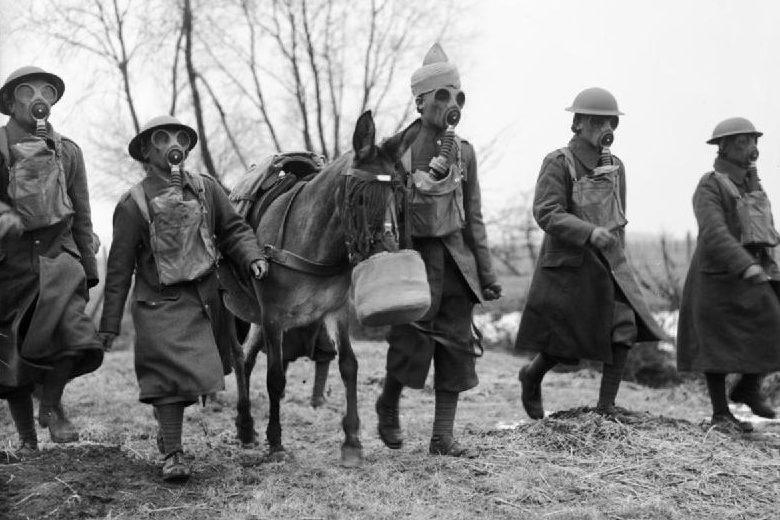 Индийские мулеры и мул в противогазах. 21 февраля 1940 г.