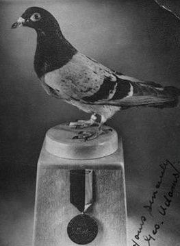 Безымянная птица №Т139 награжденная медалью Марии Дикин 12 июля 1945 года за спасения военного судна, терпящего бедствие в 60-ти км от берега во время шторма.