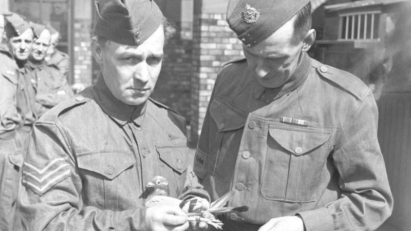 Члены национальной службы голубей со своими питомцами. 31 июля 1940 г.