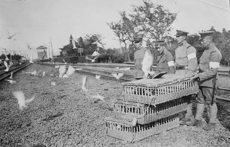 Военно-голубиная станция японской армии. 1917 г.