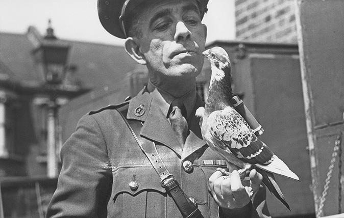Капитан Кайгер из национальной службы голубей с почтовым голубем с контейнером.