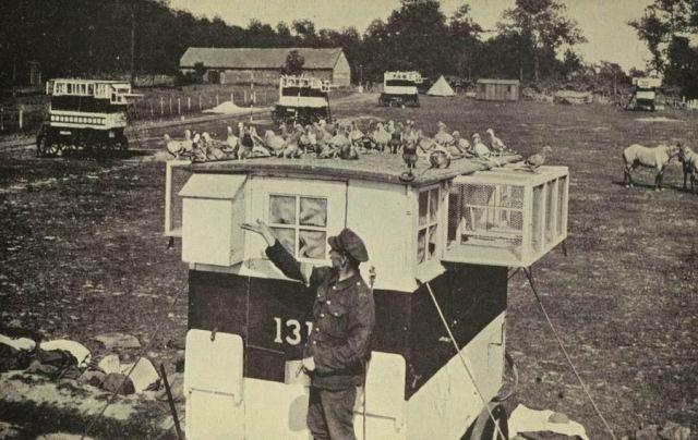 Британская база голубиной связи. 1915 г.