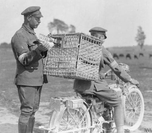 Британский мотоциклист с почтовыми голубями на фронте. 1916 г.