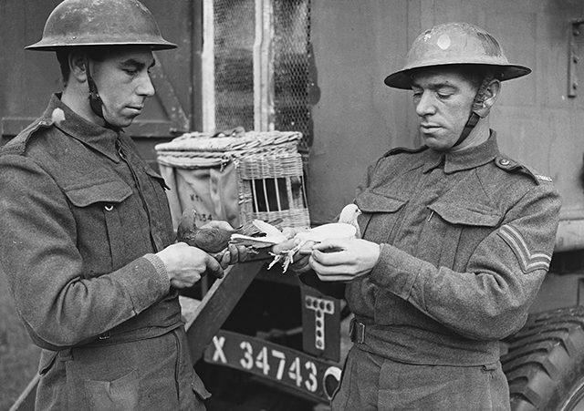Изъятие из контейнера полученной депеши. 1941 г.