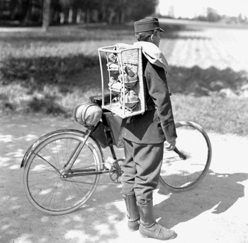 Швейцарский велосипедист с голубями. 1914 г.