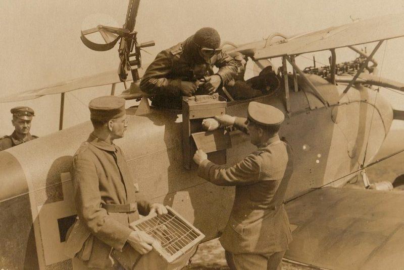Голуби шли в дополнение к военным аэропланам.