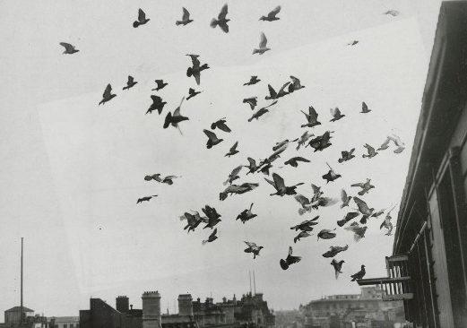 Птицы возвращаются в свои гнезда после тренировочного полета.