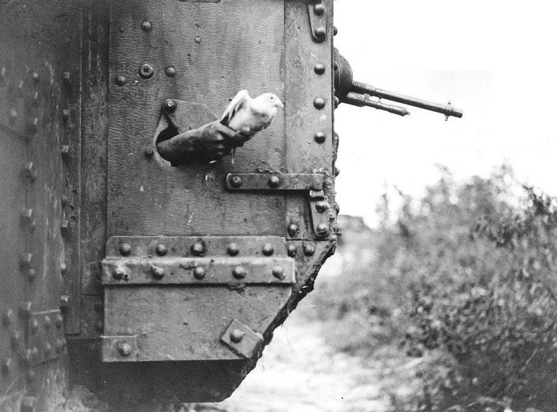 Голубиную связь использовали на бронепоездах и даже танках.