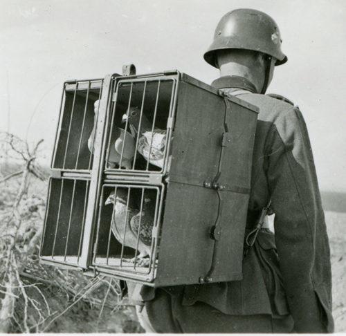 Доставка голубей в клетке в пункт отправки в пешем порядке.