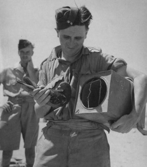 Летчики и экипажи бомбардировщиков с голубями в клетках перед вылетом. Октябрь 1942 г.