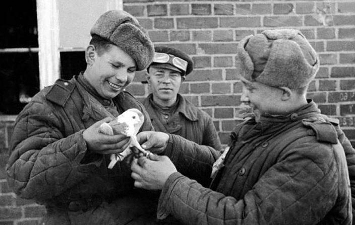 Советские военные голубеводы.