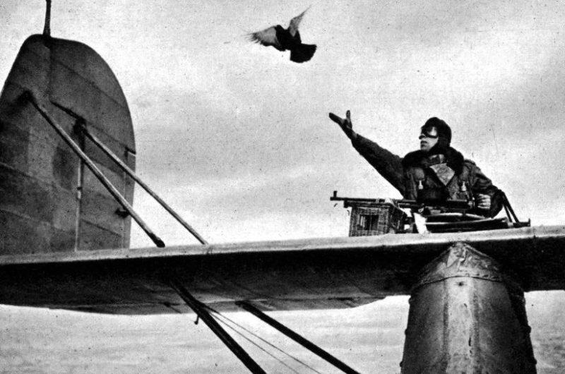 Отправка голубя с летающей лодки. Август 1941 г.