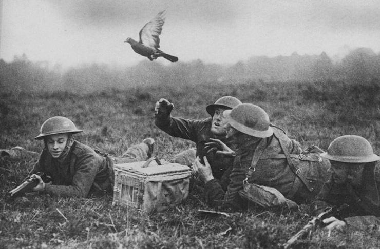 Солдаты на фронте запускают почтовых голубей.