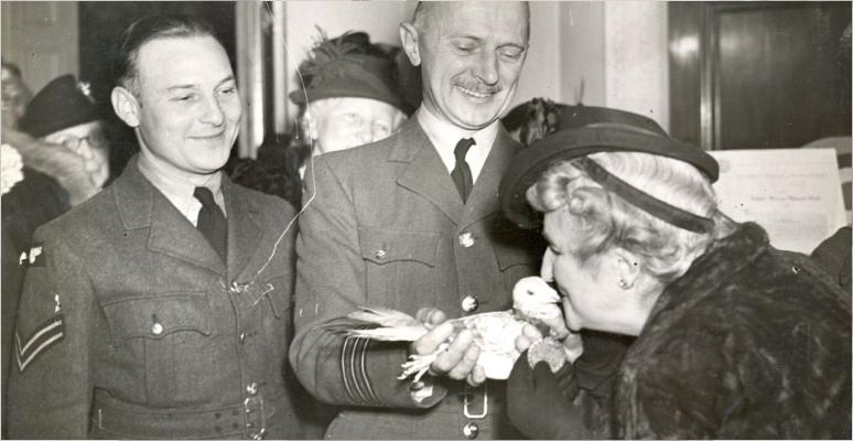 Голубь Густав получает свою медаль Дикин. 17 ноября 1944 г.