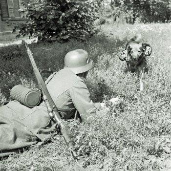 Доставка голубей на передовую посыльными собаками.