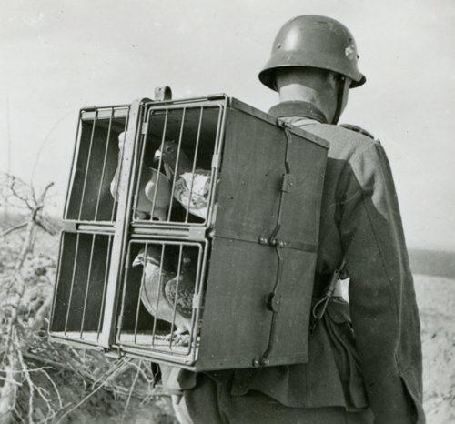 Переноска и перевозка клеток с голубями к пункту связи.
