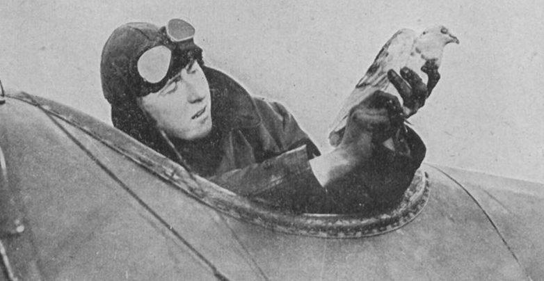 Донесение с голубем из самолета-разведчика.