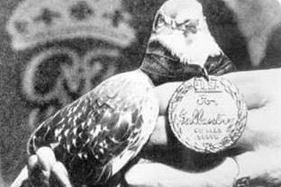 Голубь «Солдат Джо» с медалью Дикин. 18 октября 1943 года он спас жизни около тысячи мирных жителей итальянской деревни Кальви-Вечи и британским солдатам, которые отбили ее у немецких войск, предотвратив вылет бомбардировщиков.