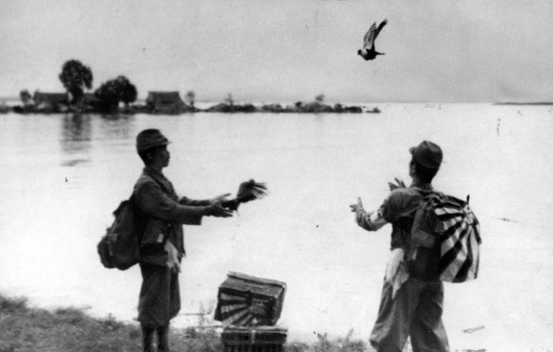 Военные корреспонденты японской газеты «Asahi Shimbun» посылают голубей с сообщениями о китайско-японской войне и нападении на китайскую Ухань. 1938 г.