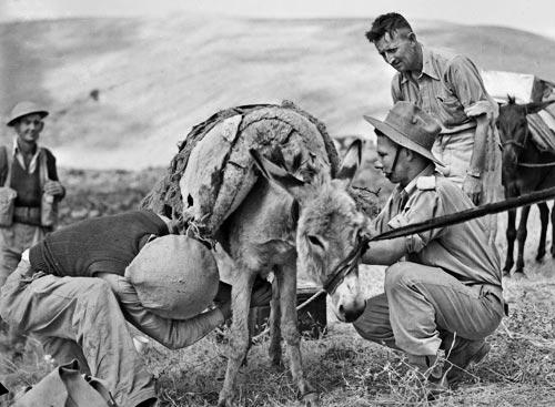 Солдаты роты «С» 2/33-го батальона во время сирийской кампании. 12 июня 1941 г.