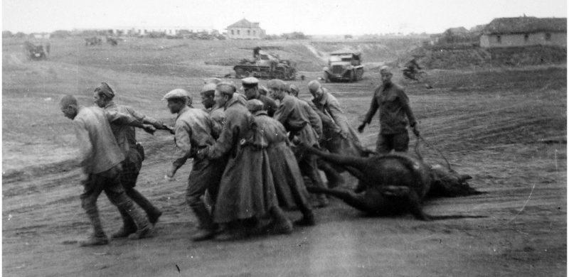 Советские военнопленные перетаскивают мертвую лошадь под Воронежем. Август 1942 г.