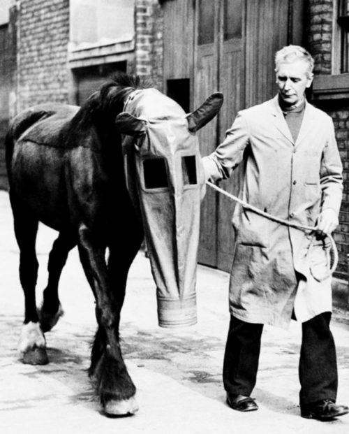 Британец с лошадью в противогазе, который был разработан специально для лошадей Лондонским обществом «Лига наших бессловесных друзей». 1940 г.