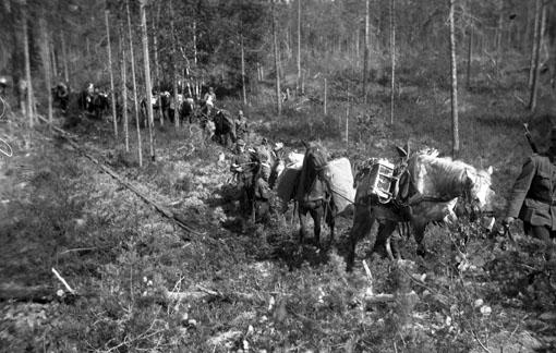 Конный обоз в лесу. 1940 г.