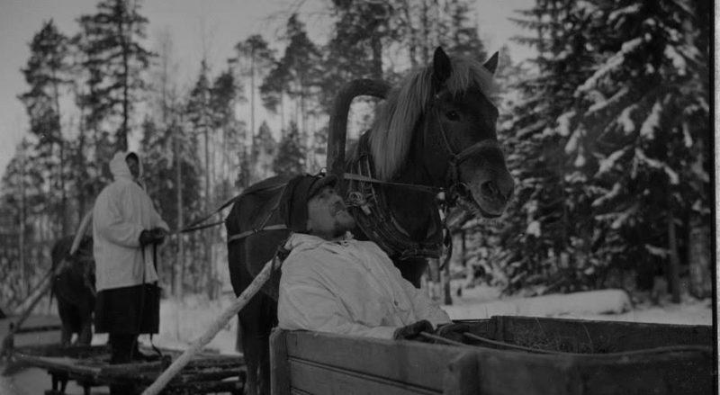 Санные упряжки. 1940 г.